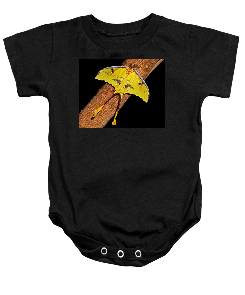 Luna Moth Baby Onesie featuring the photograph Luna Moth by Judy Vincent