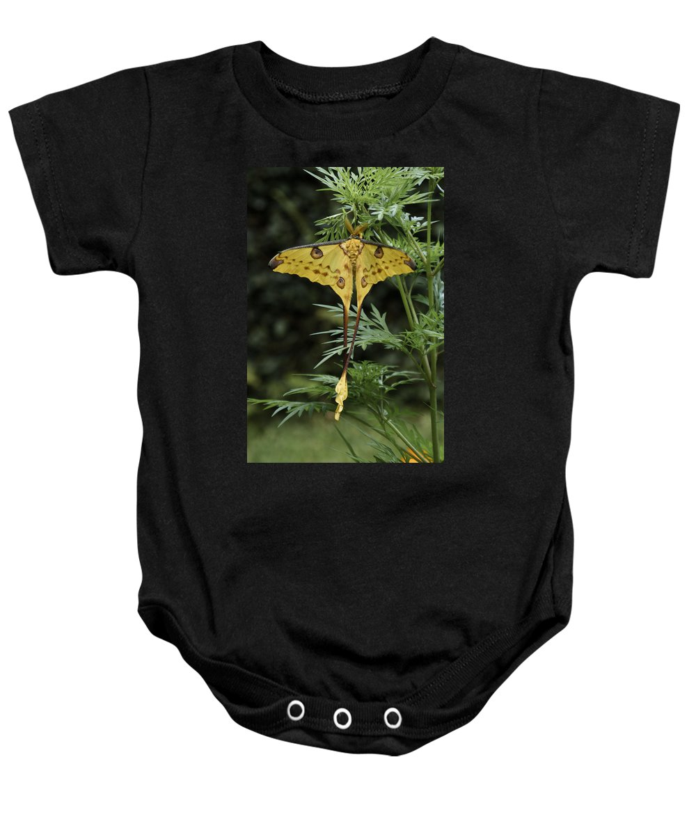 Madagascar Baby Onesie featuring the photograph Madagascar Comet Moth by Michele Burgess