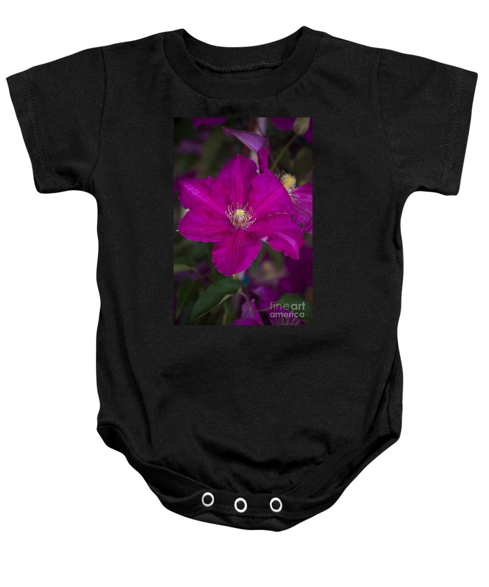 Magenta Baby Onesie featuring the photograph Magenta Clematis by Jim And Emily Bush