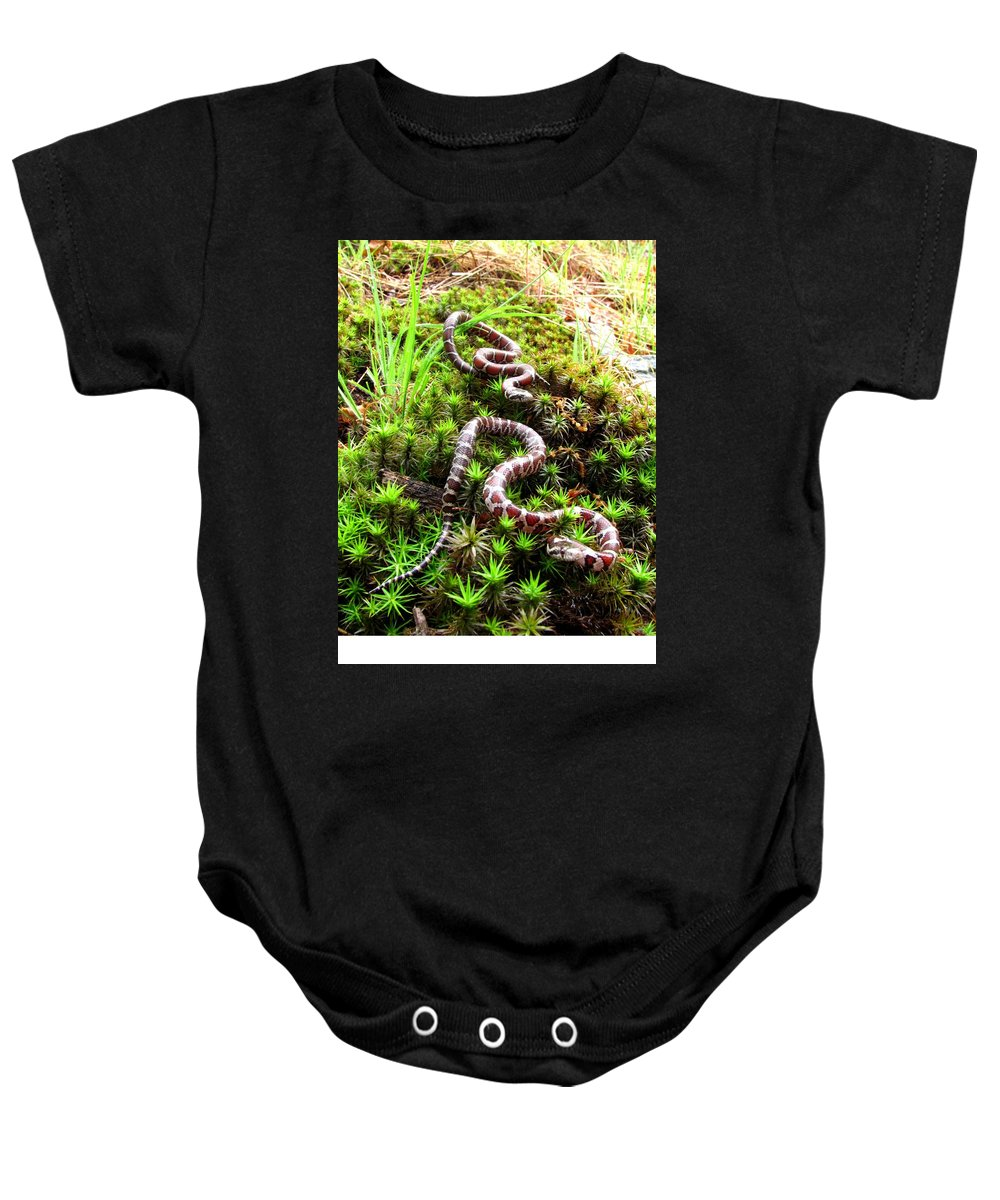 Maryland Milk Snake Photographs Milk Snake Canvas Prints Nonvenomous Reptile Herpetology Appalachian Mountain Forest Ecology Biodiversity Nature Fauna Wildlife Serpent Baby Onesie featuring the photograph Maryland Milk Snakes Verticle by Joshua Bales