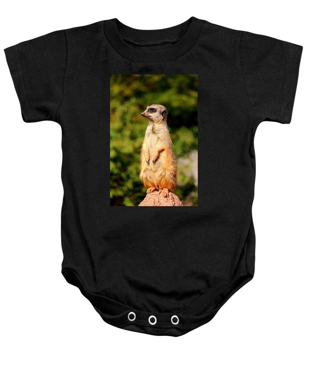 Meerkat Baby Onesie featuring the photograph Meerkat by Heike Hultsch