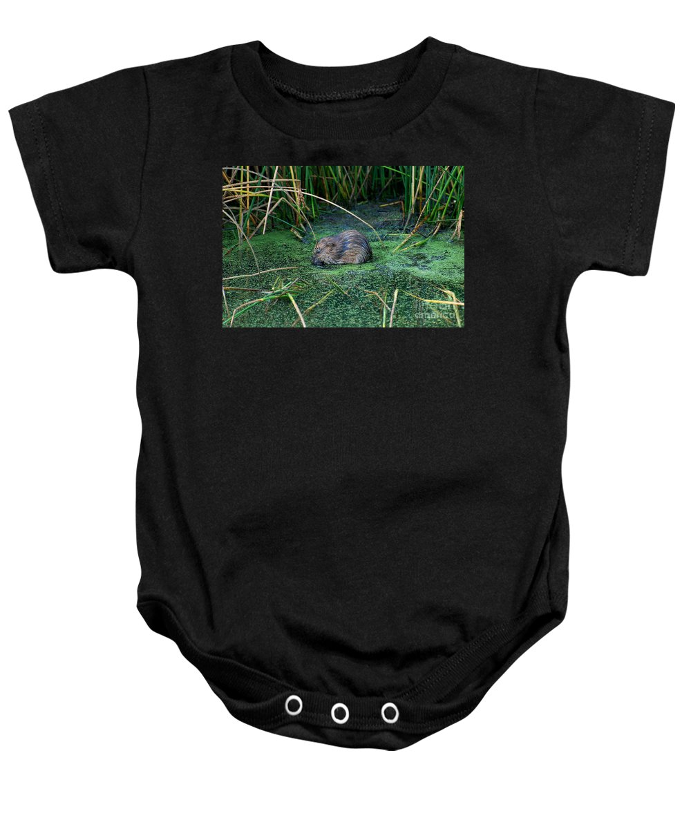 Muscrat Baby Onesie featuring the photograph Mr. Muscrat by Todd Hostetter