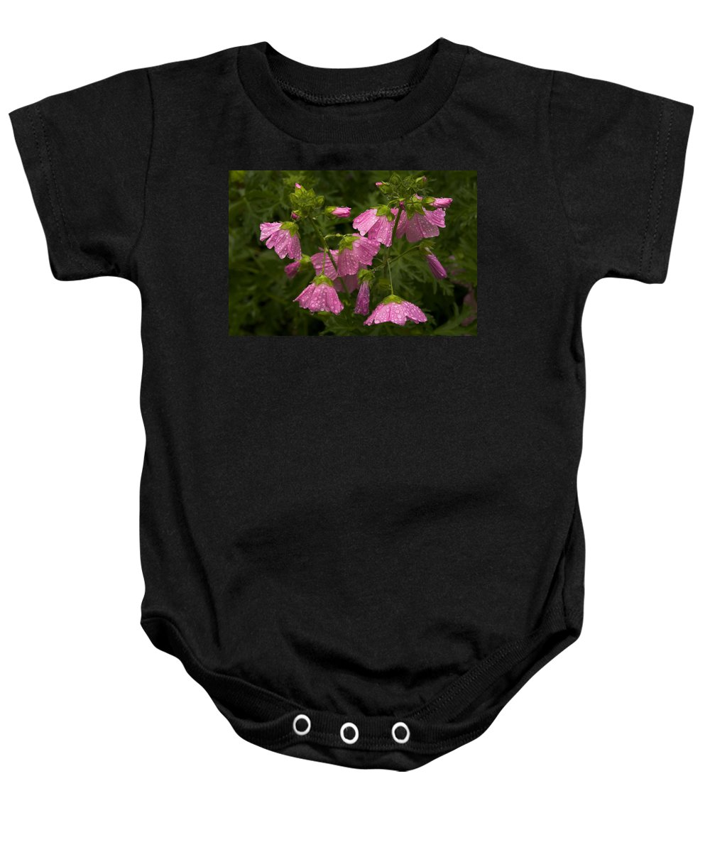 Wildflowers Baby Onesie featuring the photograph Musk-mallows Refreshed by Irwin Barrett