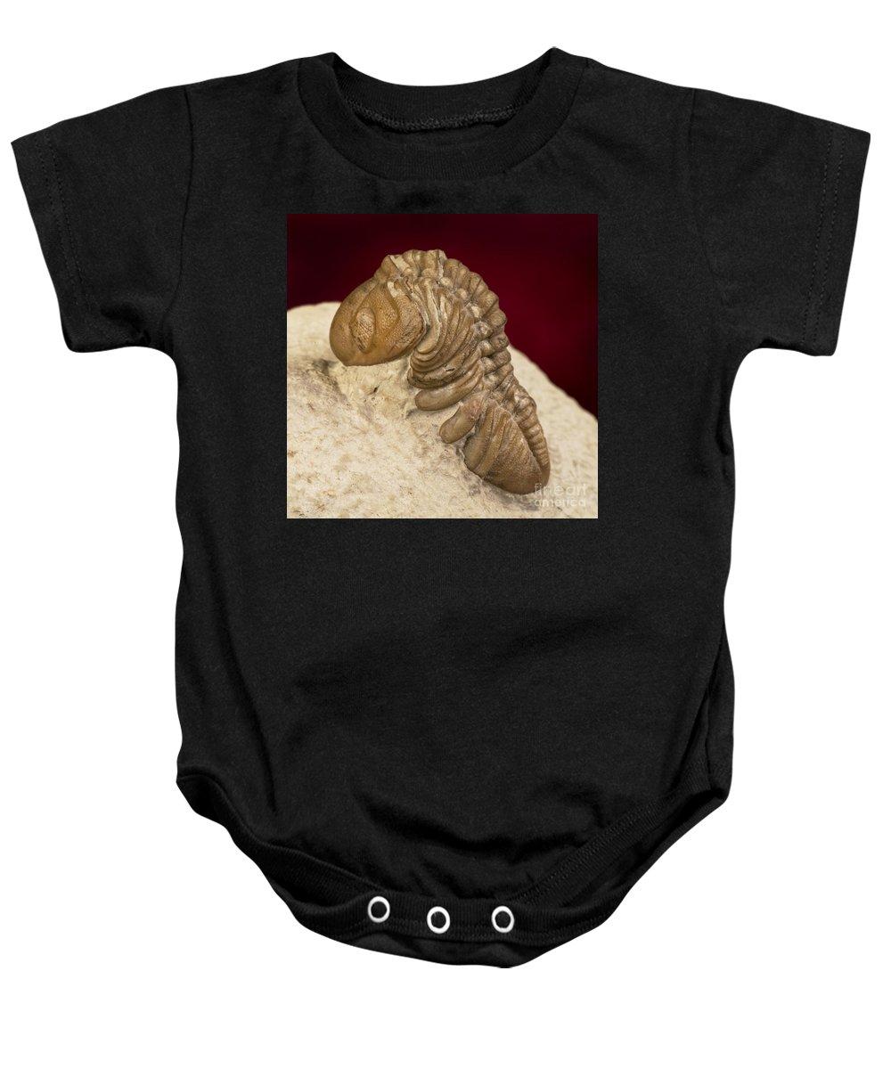 Limestone Baby Onesie featuring the photograph Oklahoma Trilobite. by W Scott McGill