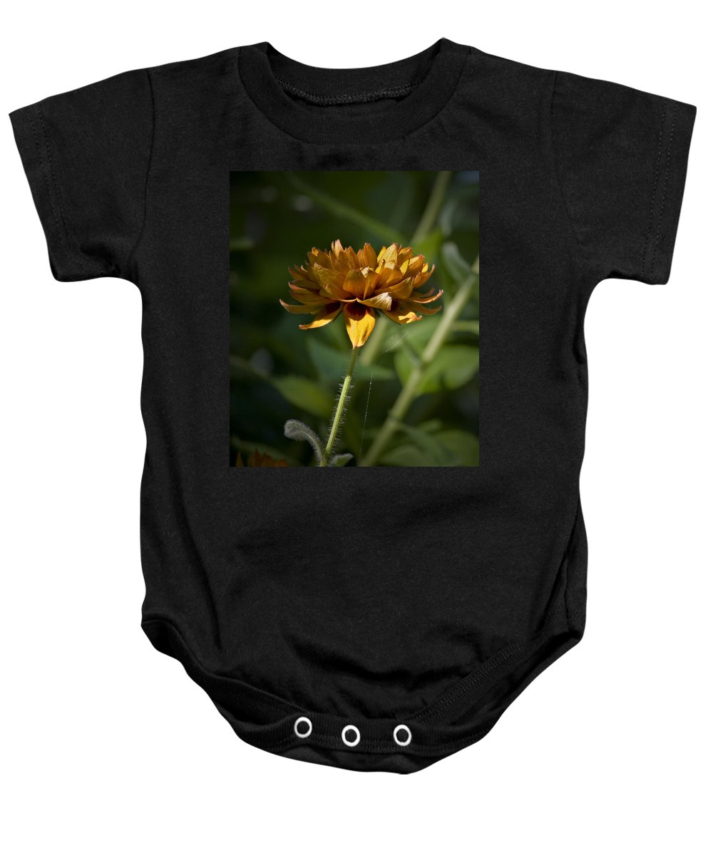 Orange Baby Onesie featuring the photograph Orange Blanket Flower by Teresa Mucha