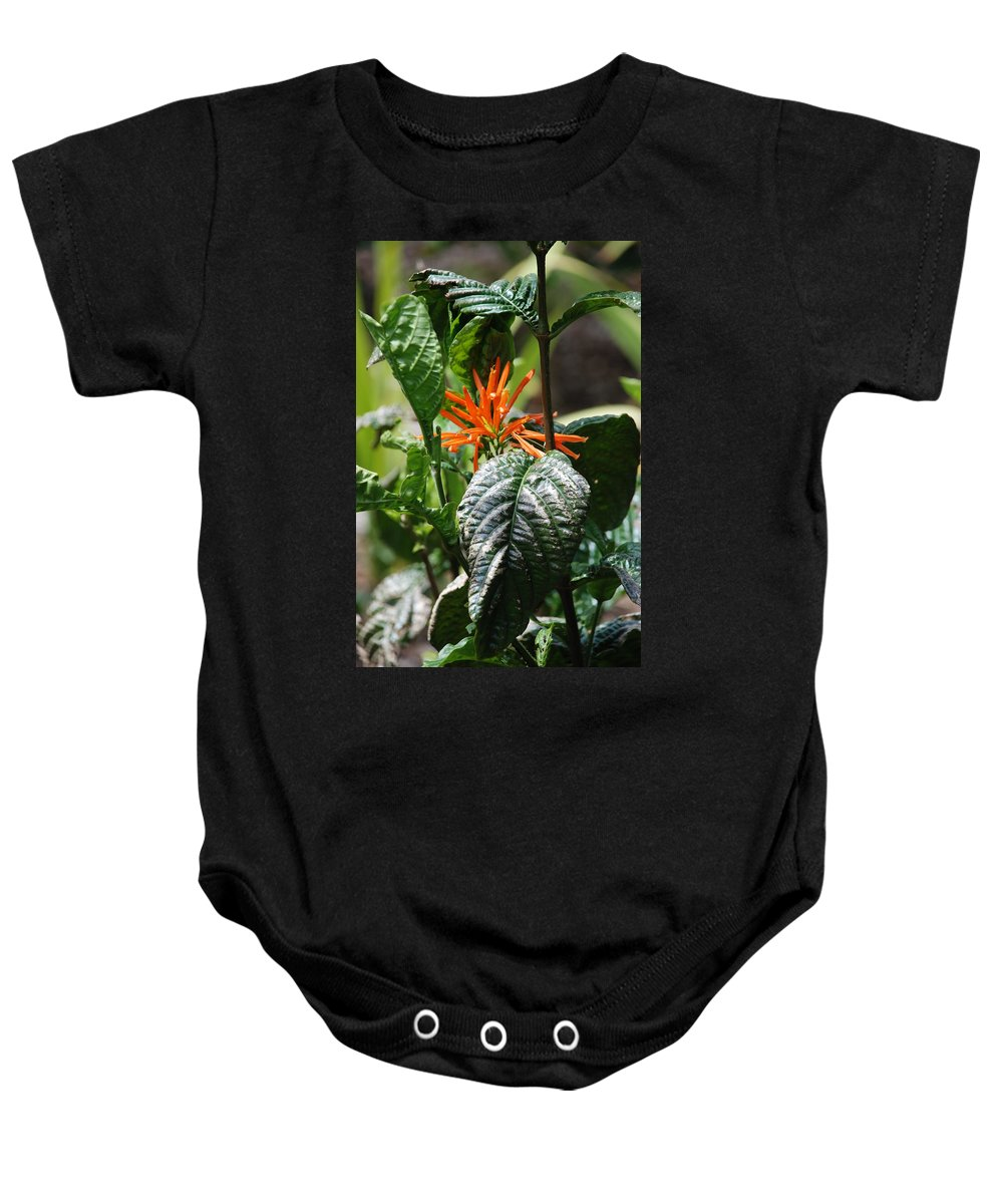 Banana Leaf Baby Onesie featuring the photograph Orange Plants by Rob Hans