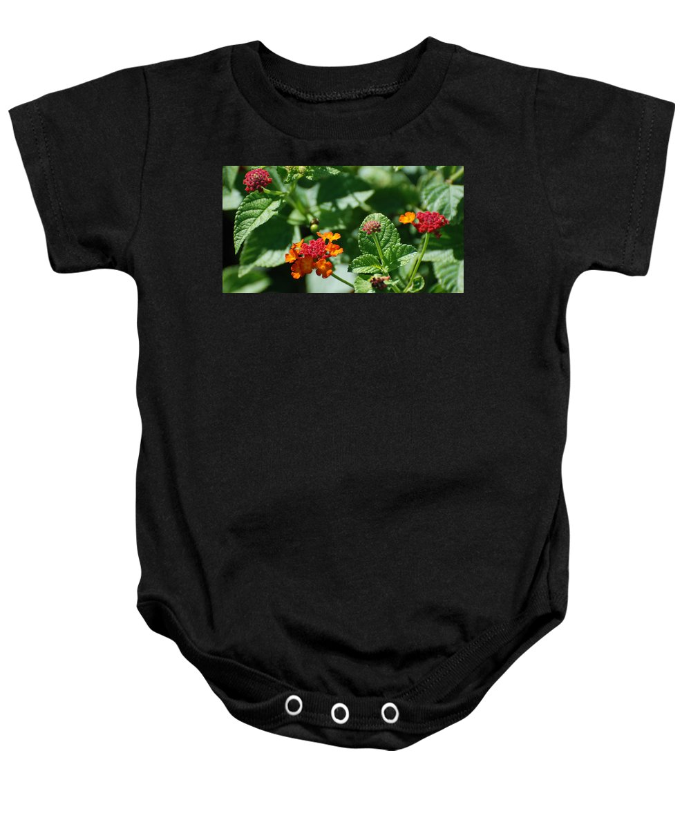 Orange Baby Onesie featuring the photograph Orange Red Flowers by Rob Hans
