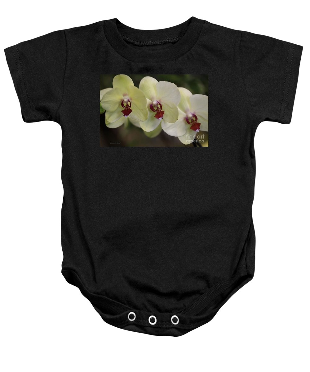 Orchids Baby Onesie featuring the photograph Orchid White Trio by Deborah Benoit