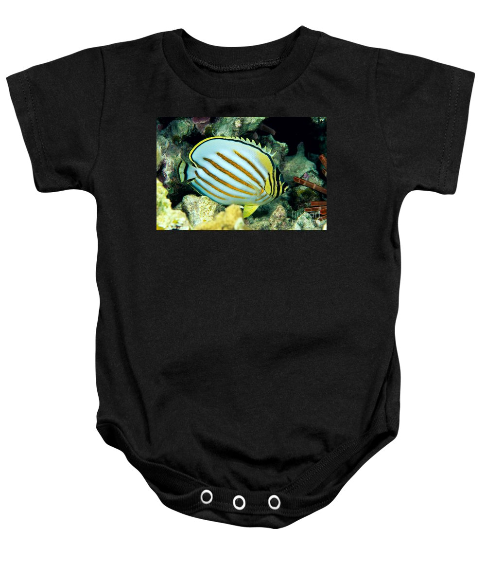 Animal Art Baby Onesie featuring the photograph Ornate Butterflyfish by Dave Fleetham - Printscapes