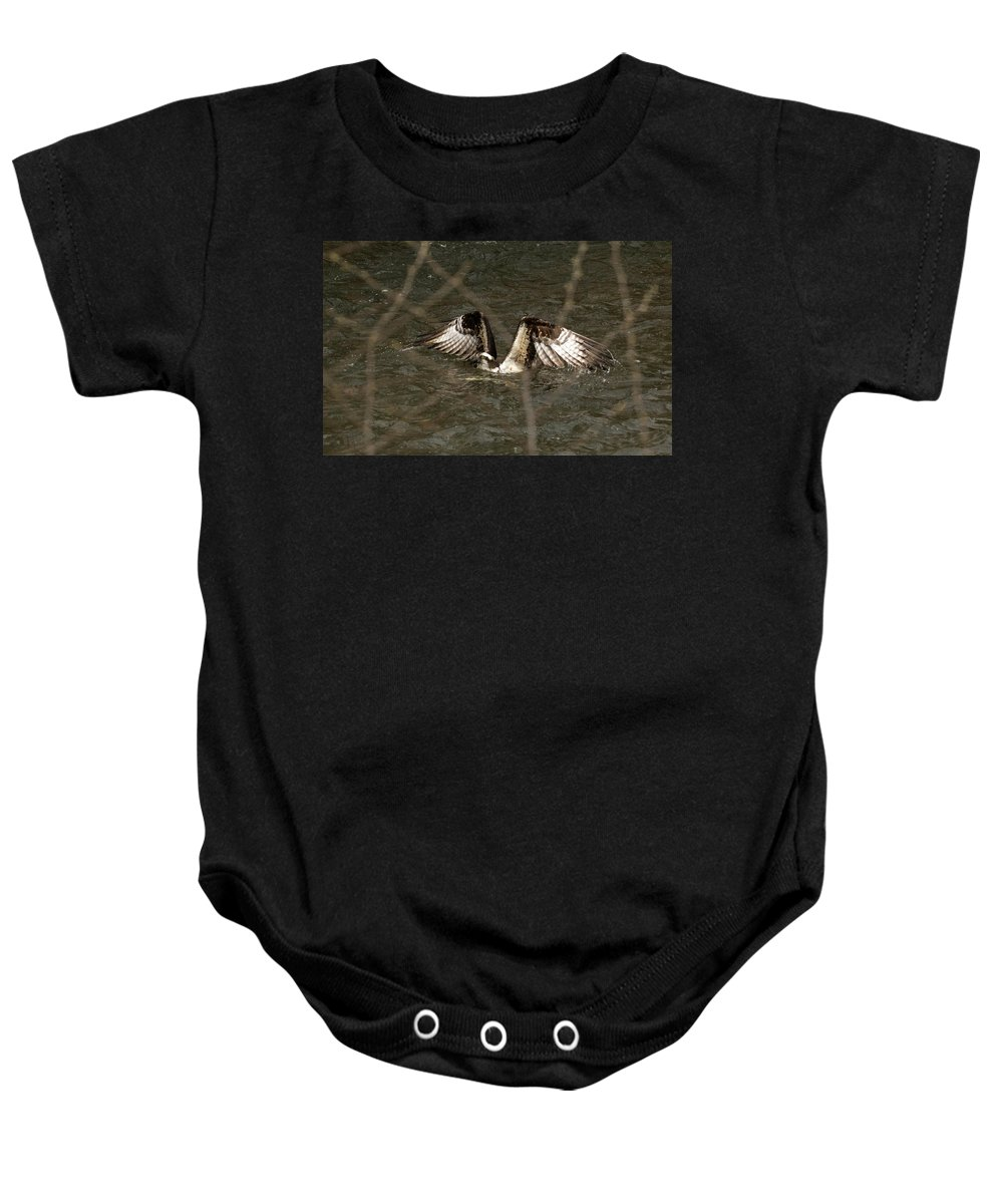 Osprey Baby Onesie featuring the photograph Osprey In The Creek by Travis Boyd