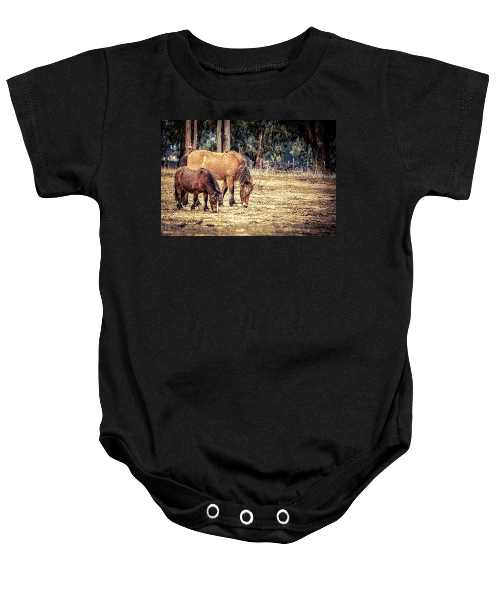 Horses Baby Onesie featuring the photograph Out To Pasture by Caitlyn Grasso