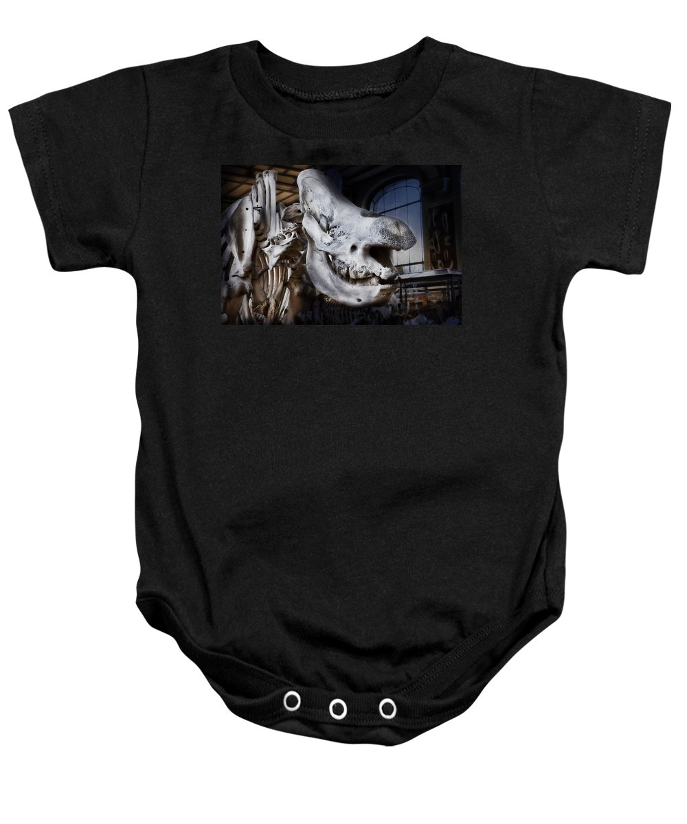 Evie Baby Onesie featuring the photograph Paris Gallery Of Paleontology 3 by Evie Carrier