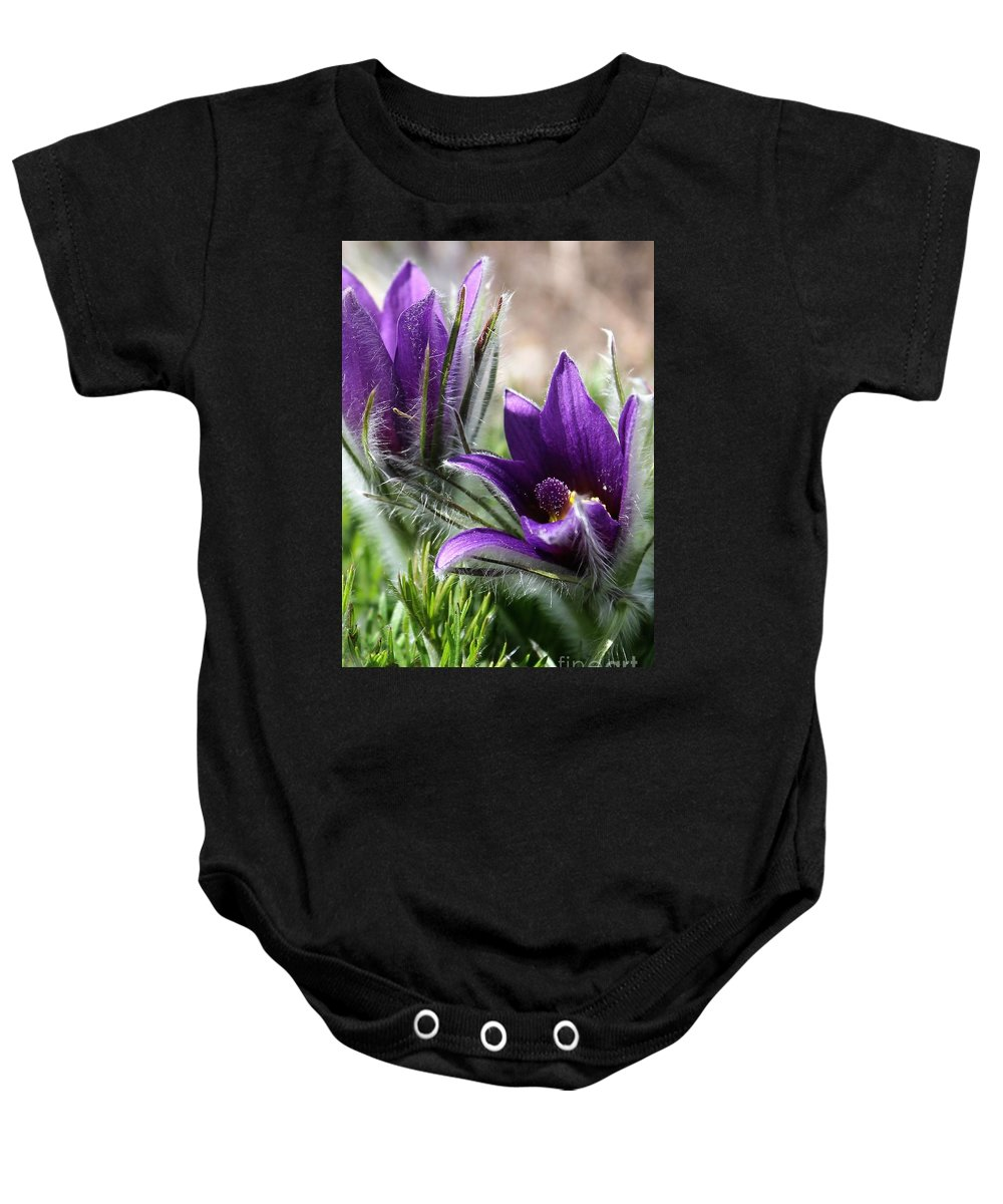 Purple Flower Baby Onesie featuring the photograph Pasque Flower Duo by Renee Croushore