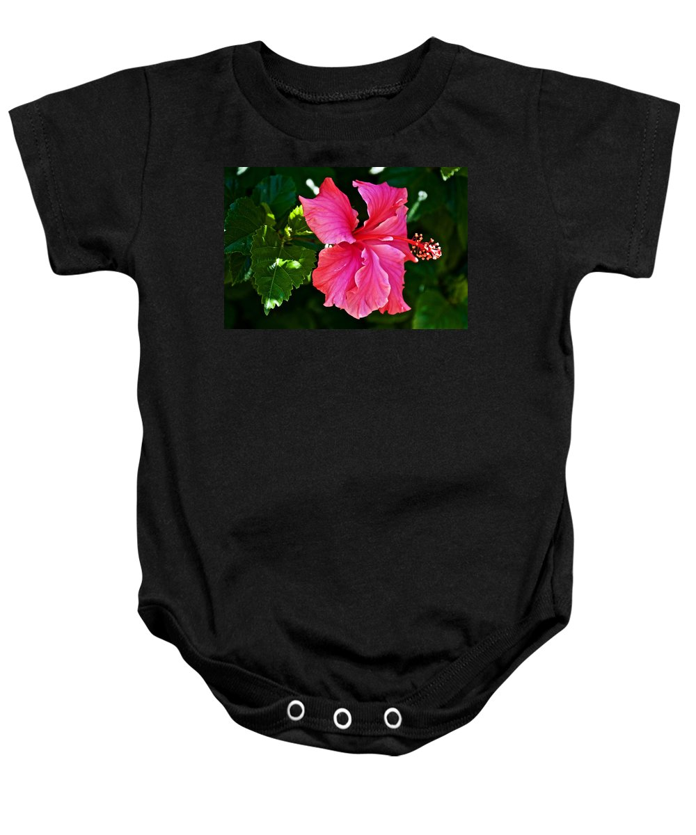 Pink Hibiscus At Pilgrim Place In Claremont Baby Onesie featuring the photograph Pink Hibiscus At Pilgrim Place In Claremont-california- by Ruth Hager