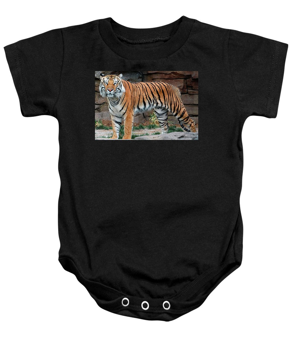 Tiger Baby Onesie featuring the digital art Pink Nosed Tiger by DigiArt Diaries by Vicky B Fuller