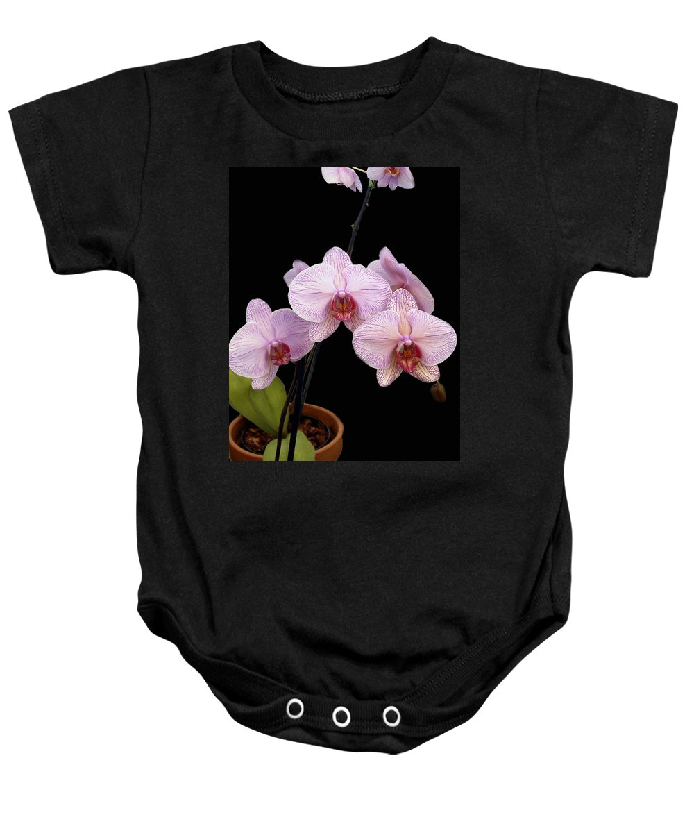 Flowers Baby Onesie featuring the photograph Pink Orchids by Kurt Van Wagner