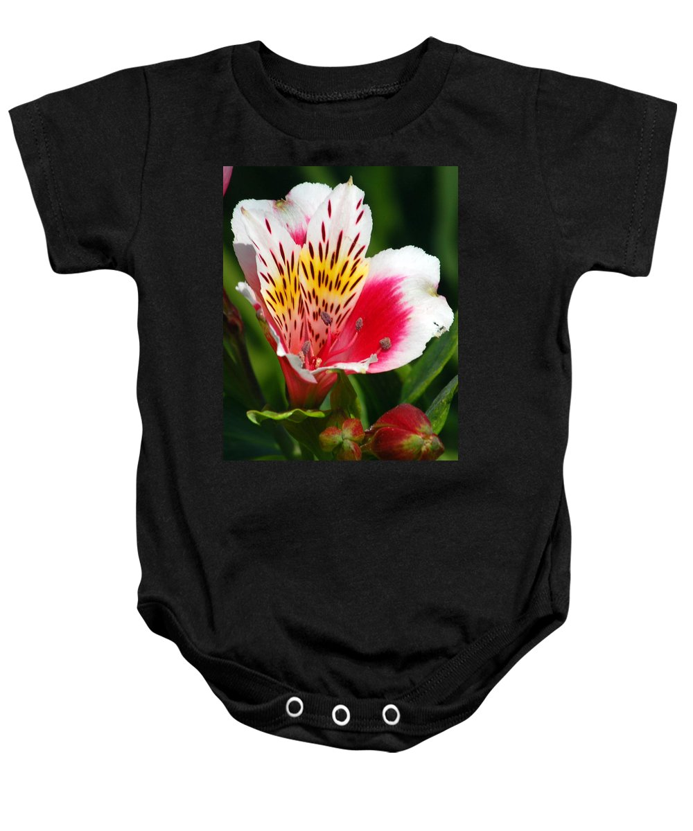Peruvian Baby Onesie featuring the photograph Pink Peruvian Lily 1 by Amy Fose