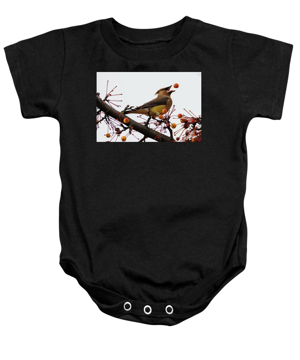 Cedar Waxwing Baby Onesie featuring the photograph Playing Catch by Mike Dawson