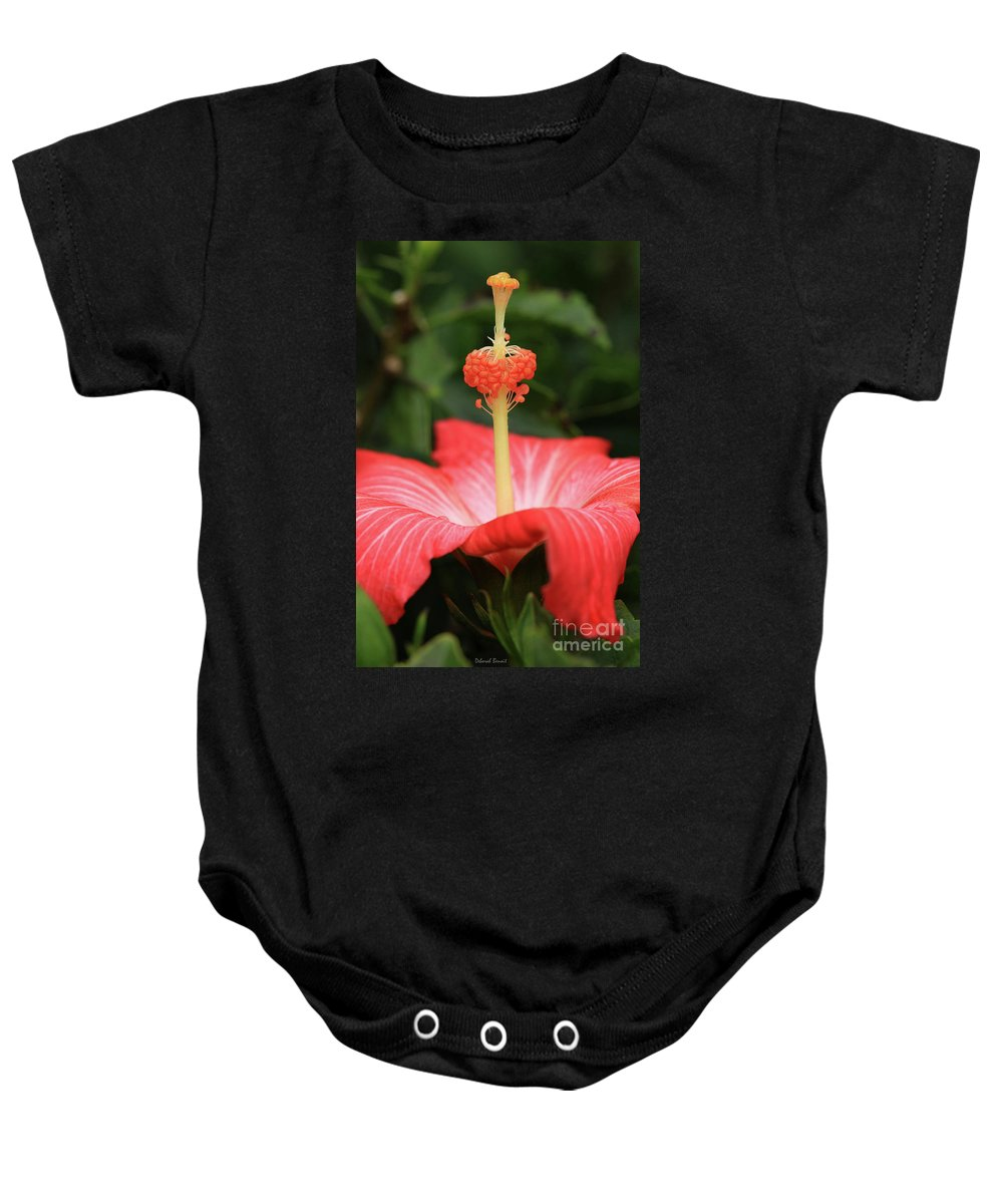 Hibiscus Baby Onesie featuring the photograph Provocative Hibiscus by Deborah Benoit