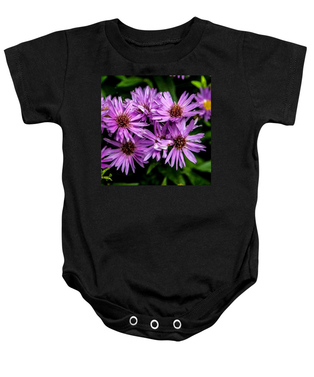 Flower Baby Onesie featuring the photograph Purple Aster Blooms by John Haldane