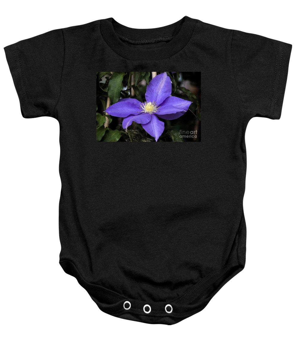 Purple Baby Onesie featuring the photograph Purple Clematis by Jim And Emily Bush