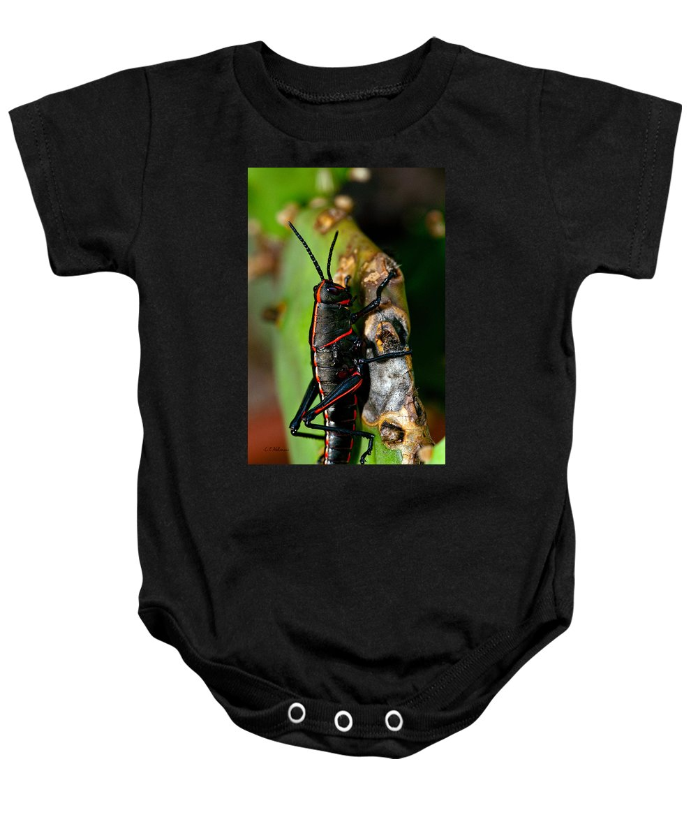 Insect Baby Onesie featuring the photograph Rally Striped by Christopher Holmes