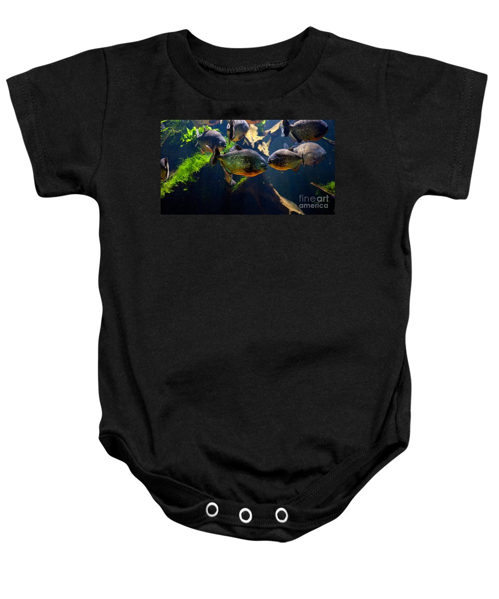Piranha Baby Onesie featuring the photograph Red Bellied Piranha Or Red Piranha by Arletta Cwalina