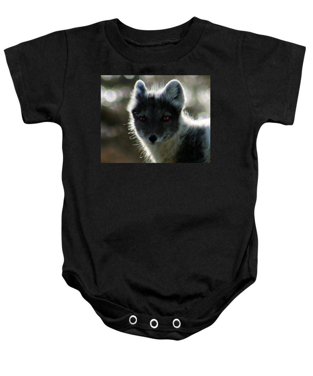 Arctic Fox Baby Onesie featuring the photograph Red Eyes by Anthony Jones