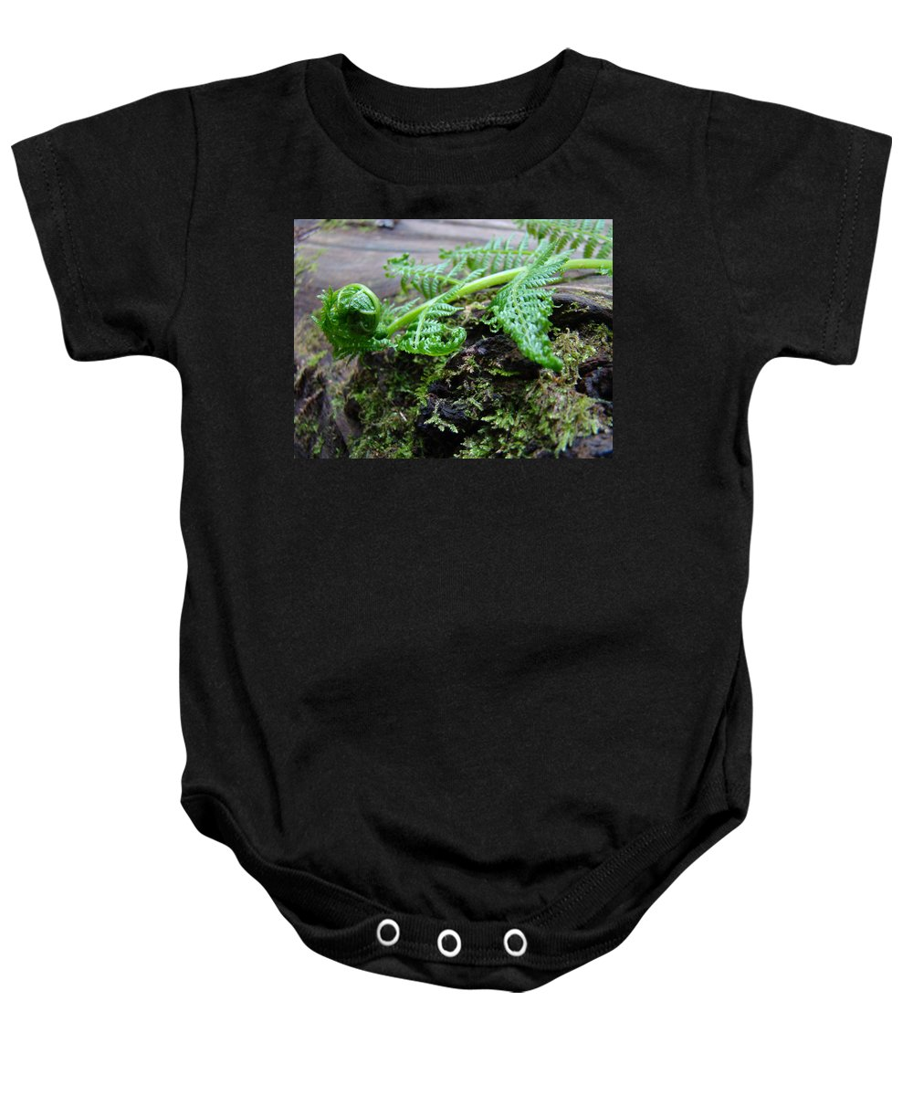 Fern Baby Onesie featuring the photograph Redwood Tree Forest Fern Art Prints Ferns Giclee Baslee Trouman by Baslee Troutman