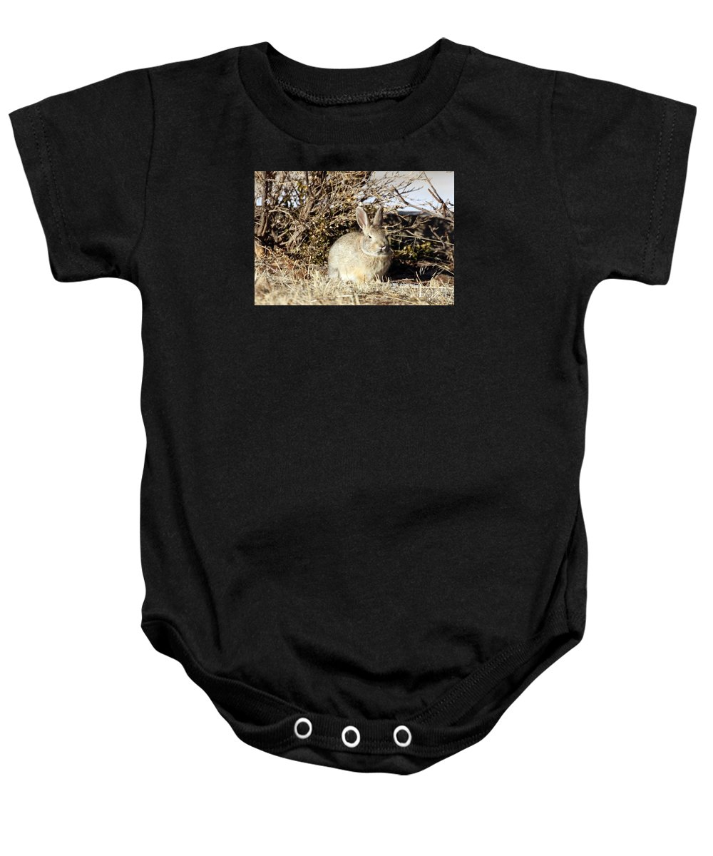 Cottontail Baby Onesie featuring the photograph Resting Cottontail by Angela Koehler