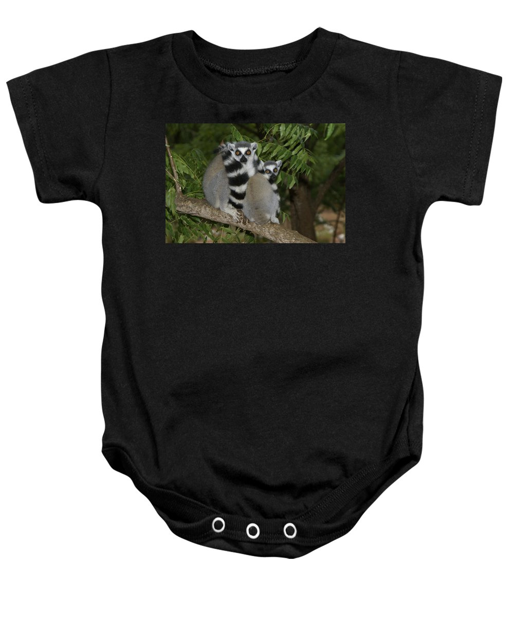 Madagascar Baby Onesie featuring the photograph Ring-tailed Lemurs by Michele Burgess