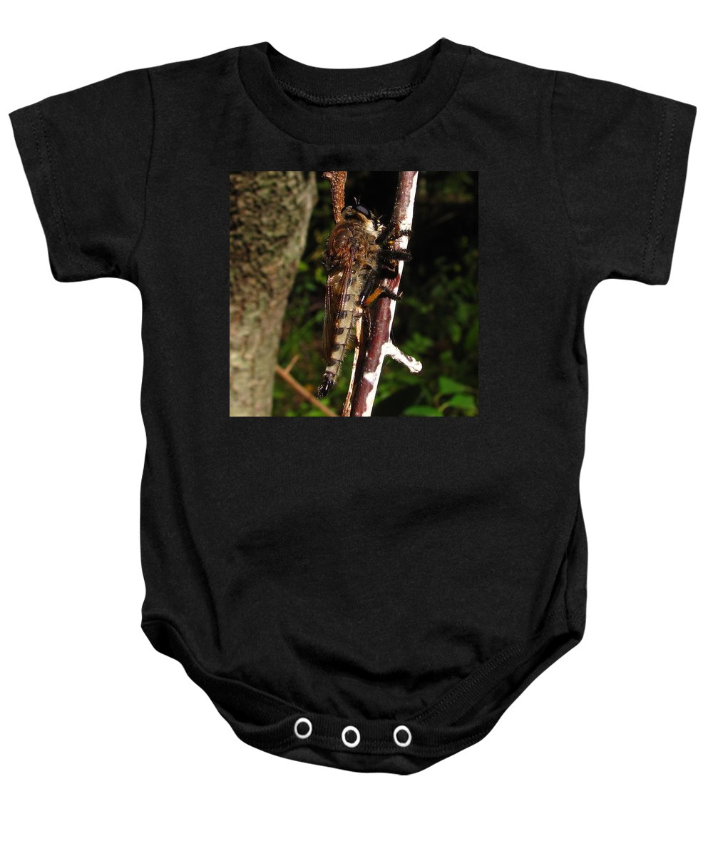 Robberfly Images Robber Fly Prints Robberfly Photos Predatory Fly Prints Forest Ecology Nature Entomology Biodiversity Oldgrowth Forest Preservation Baby Onesie featuring the photograph Robber Fly by Joshua Bales