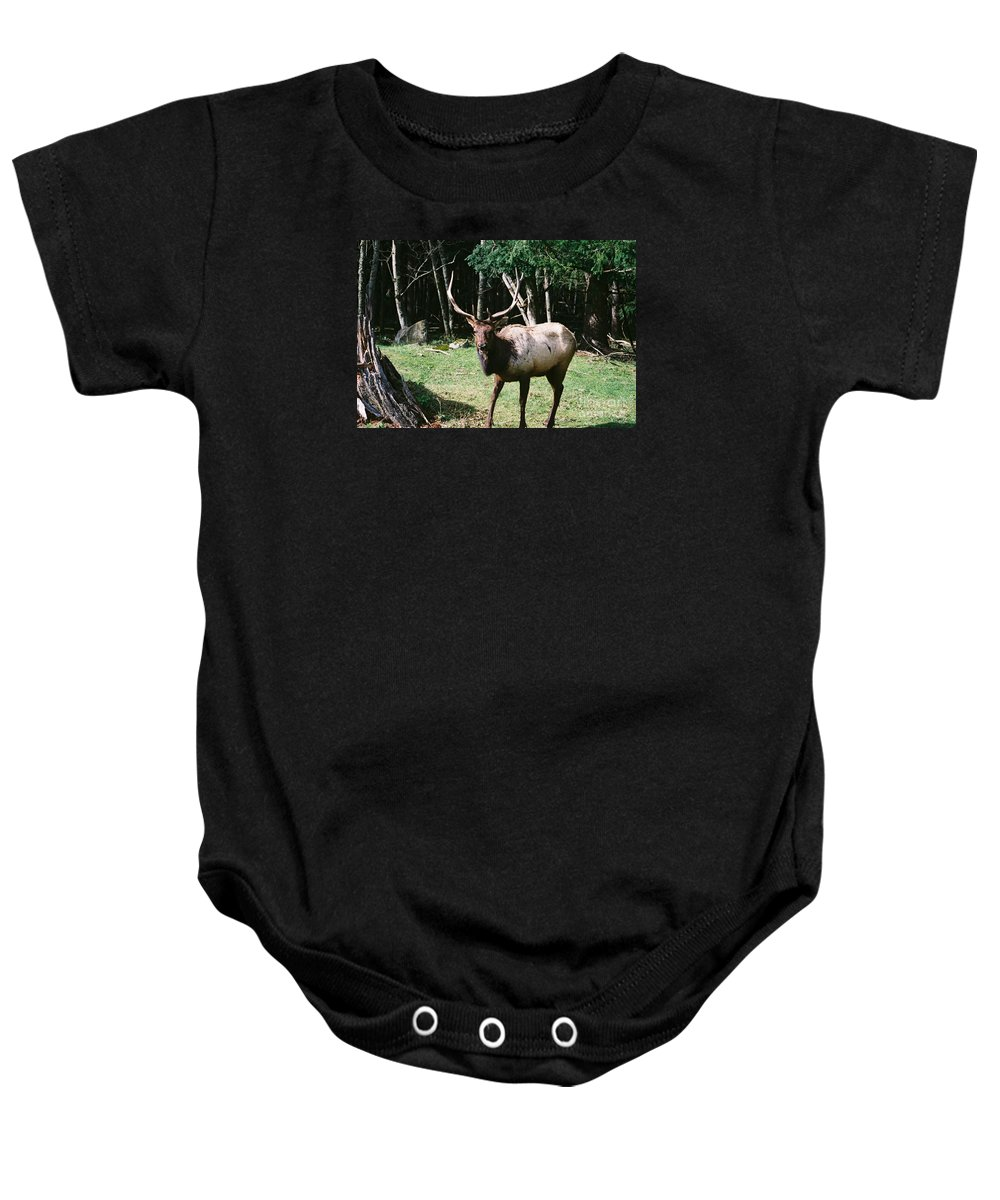 Wildlife Baby Onesie featuring the photograph Roosevelt Elk by John Huntsman
