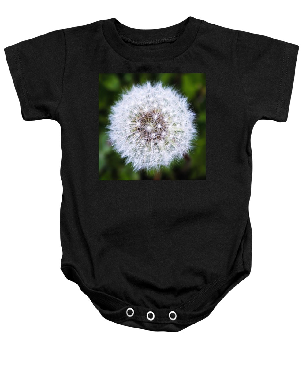 Dandelion Baby Onesie featuring the photograph Snow White Dandy by LeAnne Perry