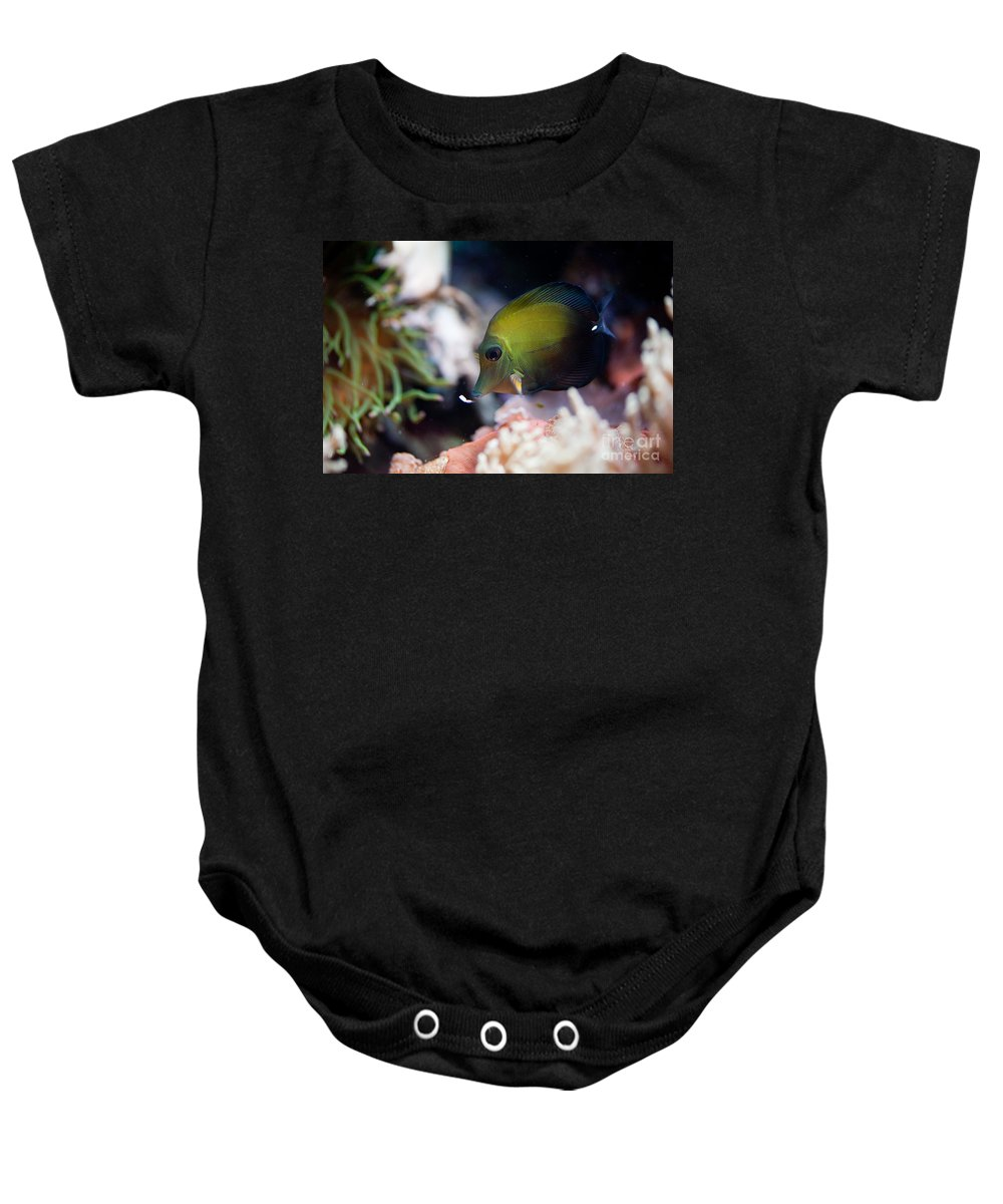 Zoo Baby Onesie featuring the photograph Spotted Aquarium One Fish by Arletta Cwalina