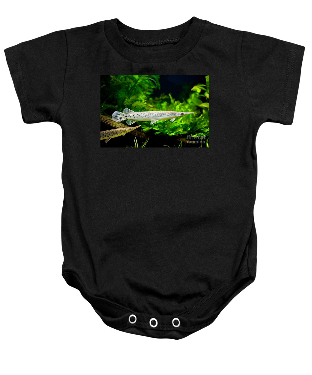 Zoo Baby Onesie featuring the photograph Spotted Gar Aquarium Fishes Pair by Arletta Cwalina