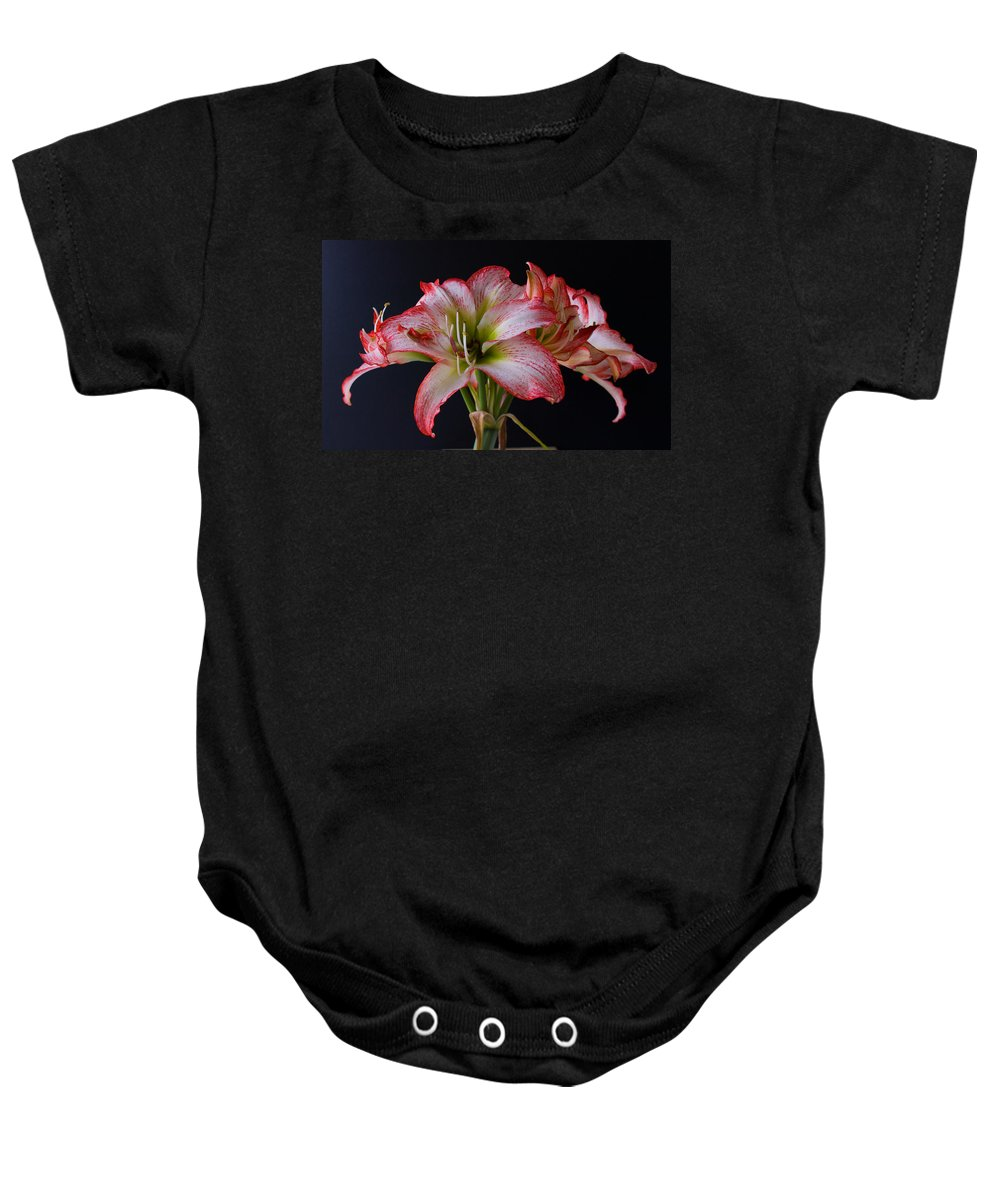 Amaryllis; Flower; Bloom; Blossom; Springtime; Spring; March; Stem. Bulb; Plant; Wildflower; Black; Baby Onesie featuring the photograph Spring Amaryllis by Allan Hughes