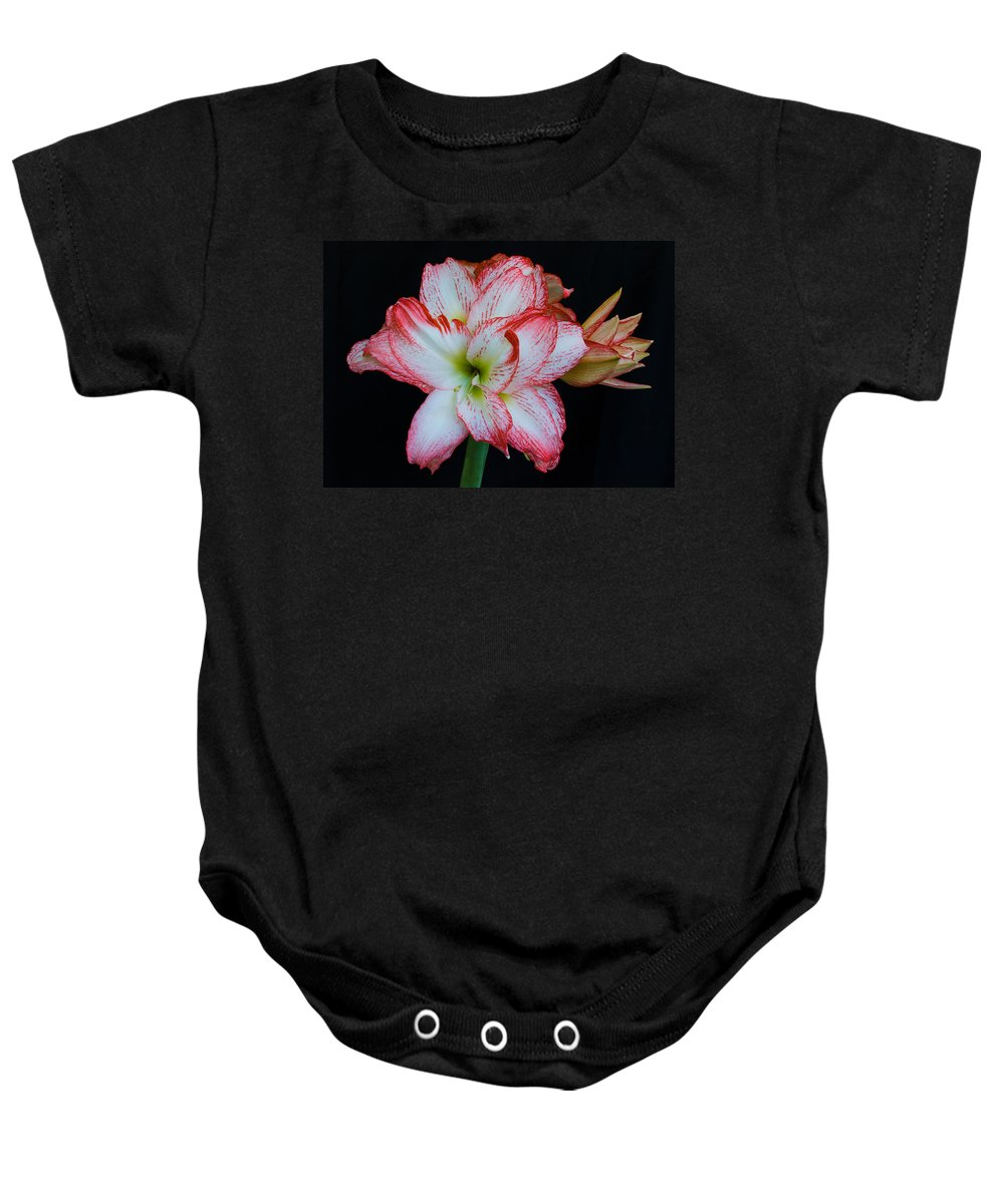 Amaryllis; Flower; Bloom; Blossom; Springtime; Spring; March; Stem. Bulb; Plant; Wildflower; Black; Baby Onesie featuring the photograph Springtime Florida Amaryllis by Allan Hughes