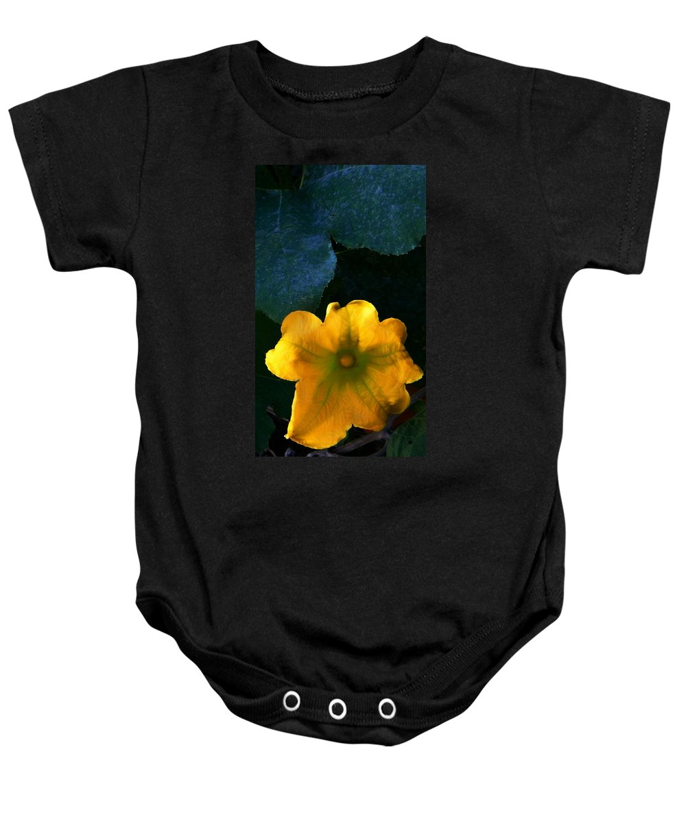Colors Baby Onesie featuring the photograph Squash Blossom by Lenore Senior