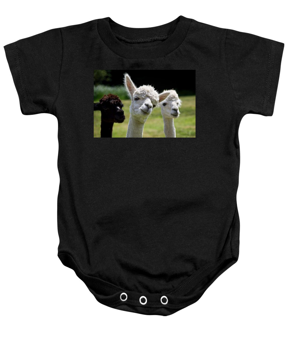 Alpaca Baby Onesie featuring the photograph Stealing The Limelight by Susie Peek