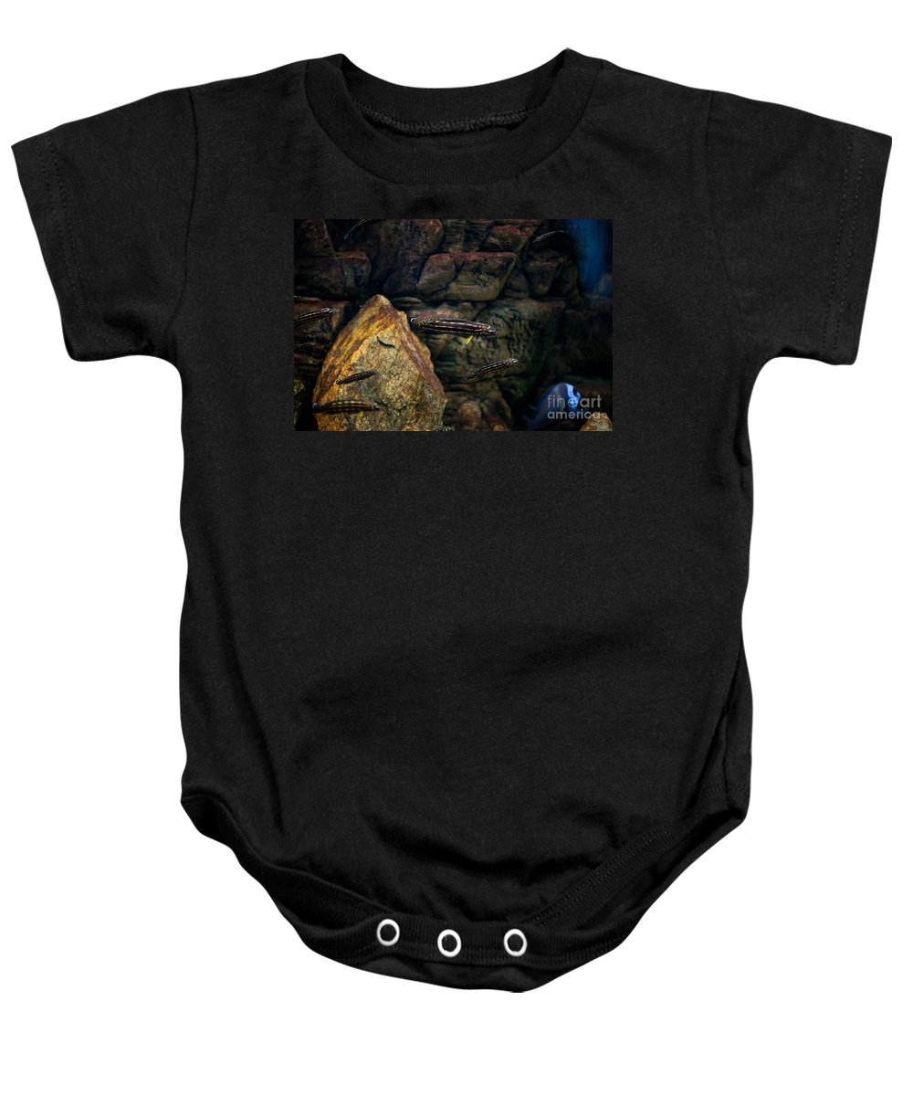 Zoo Baby Onesie featuring the photograph Striped Little Fishes In Aquarium by Arletta Cwalina