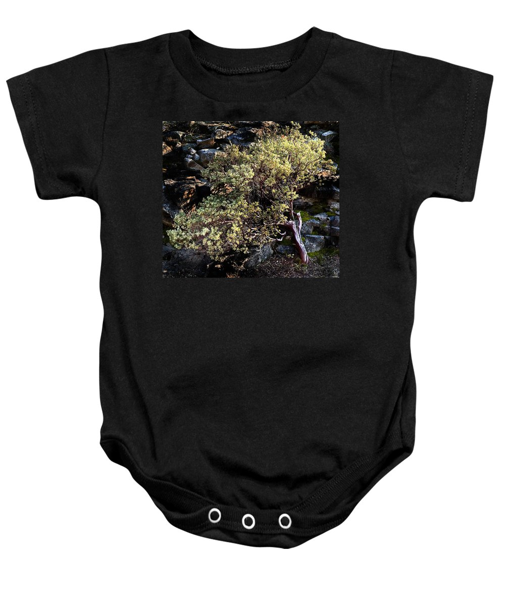 Trees Baby Onesie featuring the photograph Sunny Tree by Norman Andrus