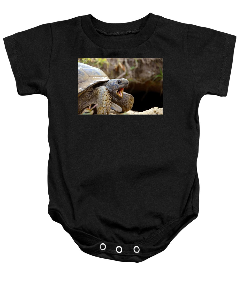 Gopher Tortoise Baby Onesie featuring the photograph The Great Gopher Tortoise by David Lee Thompson