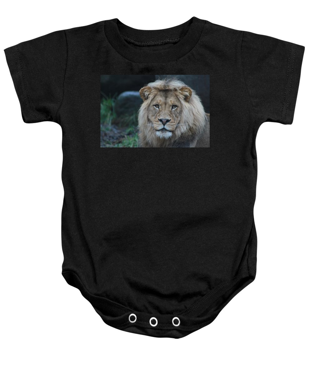 Lion Baby Onesie featuring the photograph The King by Laddie Halupa