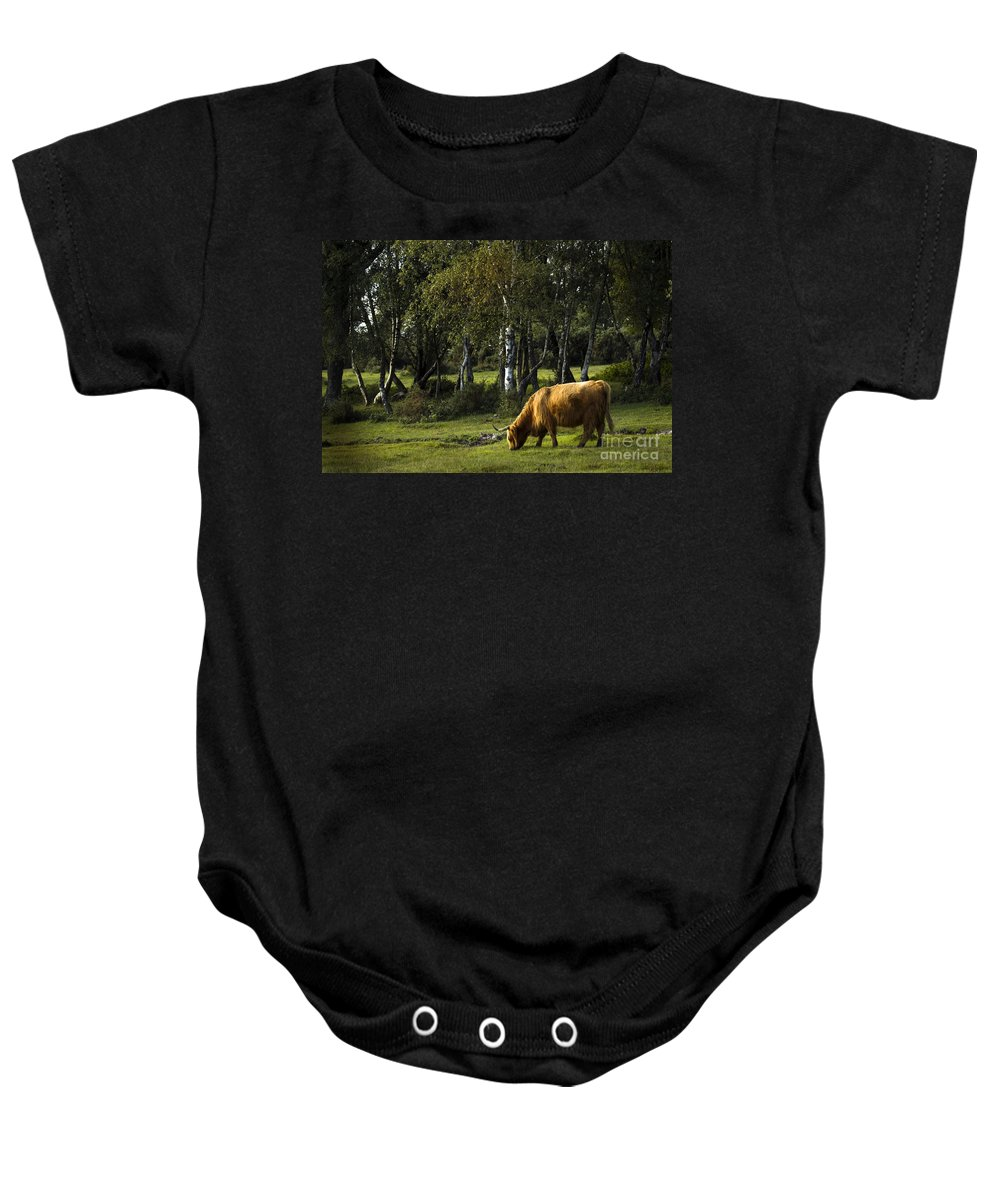 Heilan Coo Baby Onesie featuring the photograph the New forest creatures by Angel Ciesniarska