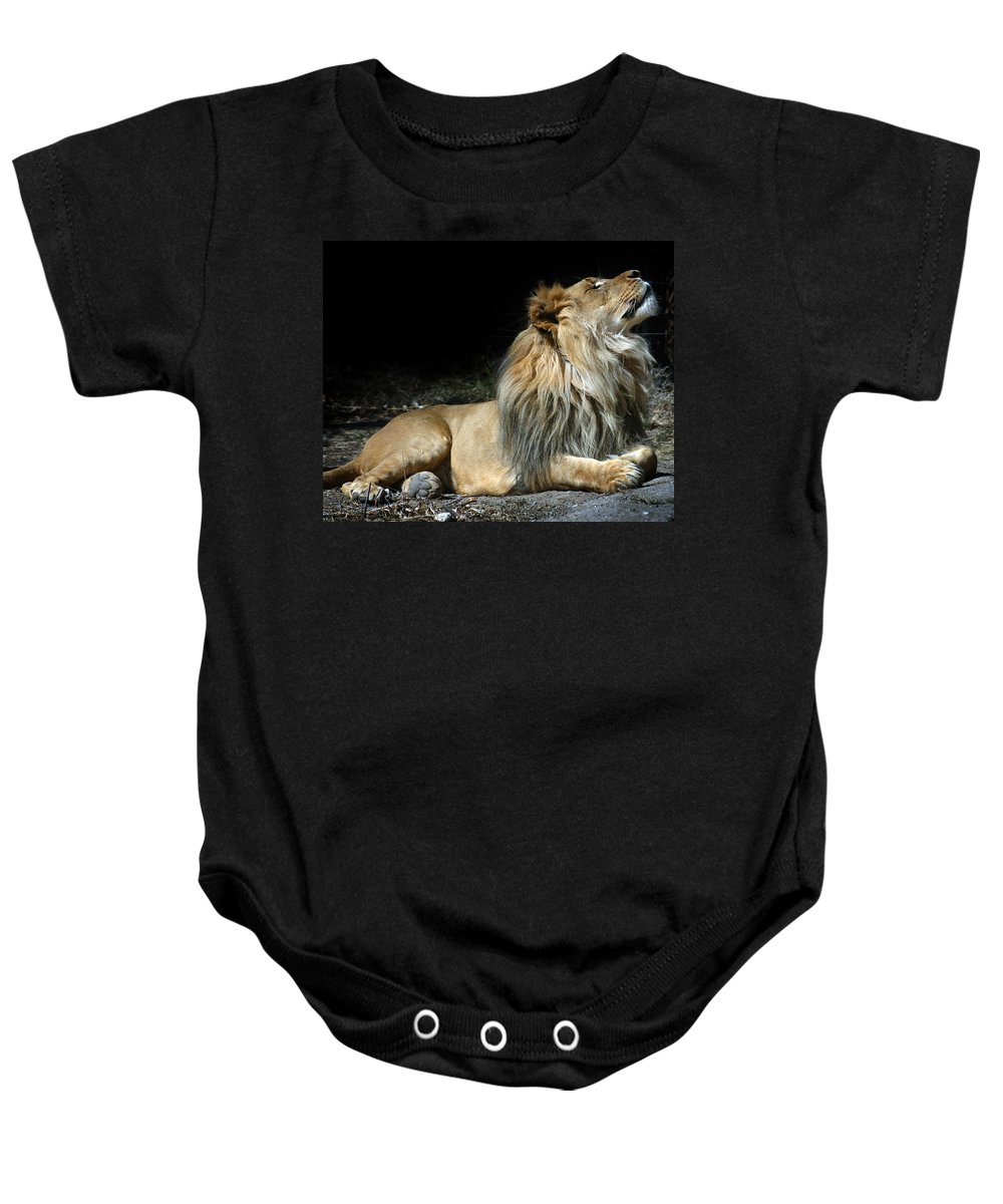 Lion Baby Onesie featuring the photograph This Is My Best Side by Anthony Jones