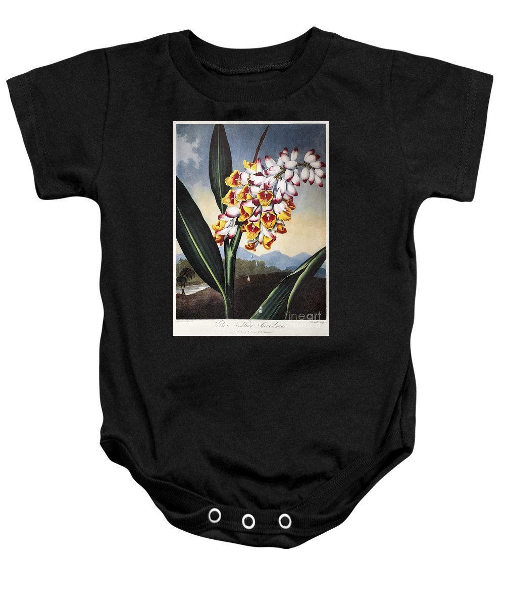 1801 Baby Onesie featuring the photograph Thornton: Shell Ginger by Granger