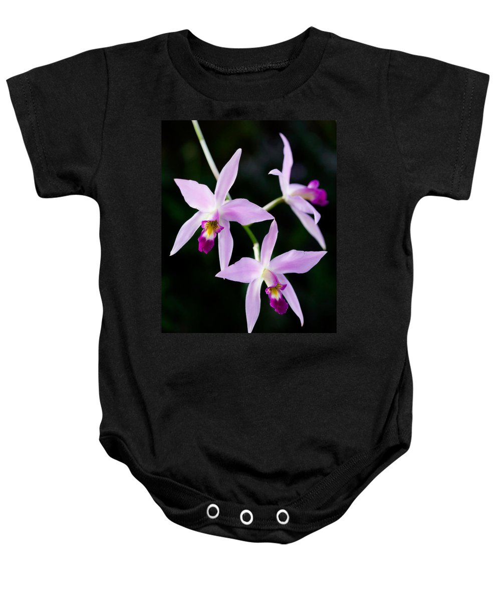 Orchid Baby Onesie featuring the photograph Three Orchids by Marilyn Hunt