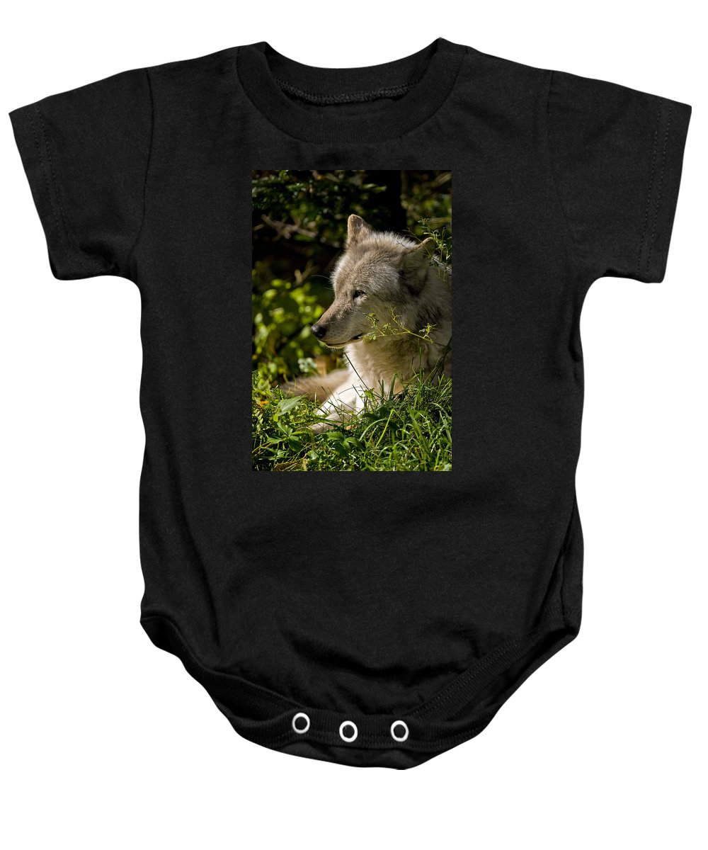 Michael Cummings Baby Onesie featuring the photograph Timber Wolf Portrait by Michael Cummings