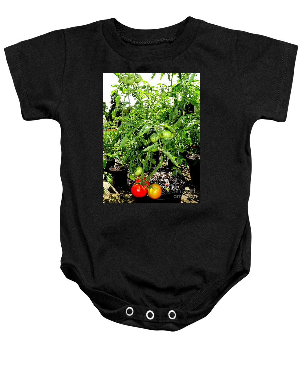 Nature Baby Onesie featuring the photograph Tomatoes On The Vine by Ed Weidman